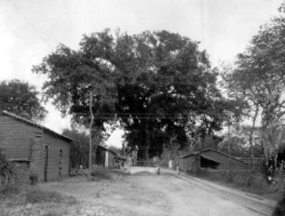 Calle de un poblado con un árbol cercado junto a las vías del ferrocarril