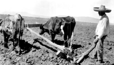Hombre labra la tierra con una yunta de bueyes