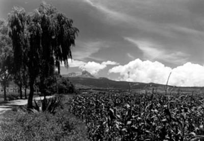 Exhacienda La Huerta, lote