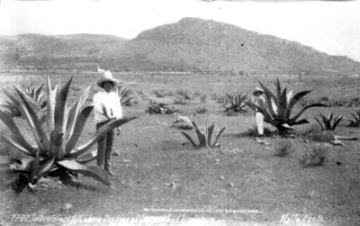"""Tetzcutzingo, cerro donde el rey de Texcoco tenía su Palacio, """"1302. Tetzcotzinco hill, where the king of Texcoco had his Palace"""" (sic)"""