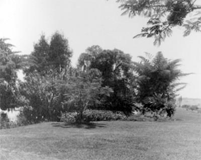 Arboles a la orilla de un lago, vista parcial