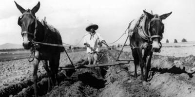 Campesino arando con yunta de acemilas, retrato