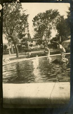 Mujer observa patos en una fuente del Parque Hidalgo