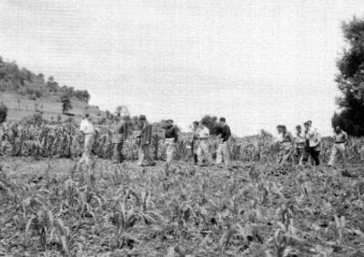 Agricultores inspeccionando un campo de cultivo de maíz