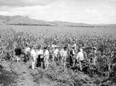 Funcionarios y agricultores inspeccionando un campo de cultivo de maíz