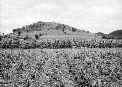 Terreno de cultivo de maíz, vista parcial