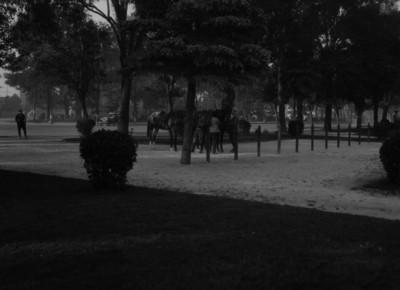 Hombres atan caballos a árboles en Chapultepec