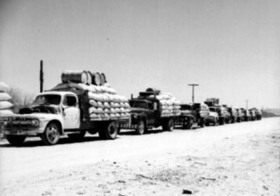 Camiones cargados de trigo, durante un acarreo por la carretera