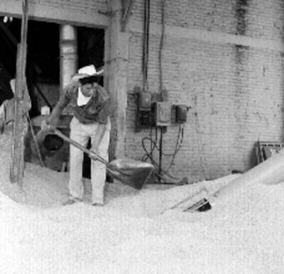 Trabajadores amotonando arroz con pala en un molino de Culiacán