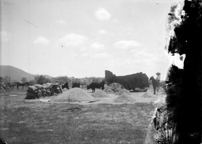 Campesinos arrean ganado y estiban costales en un campo