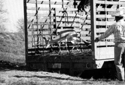 Antílope baja de camión en el Africam Safari