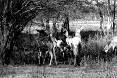 Tramo de campo en el Africam Safari