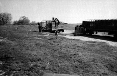 Animales bajan de un camión en el Africam Safari