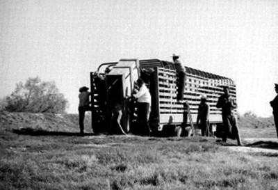 Hombres bajan a animal enjaulado de un camión en el Africam Safari