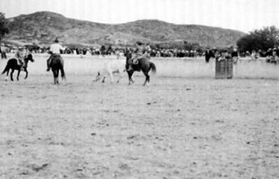 Hombres montan a caballo dentro de rodeo y atrapan una res