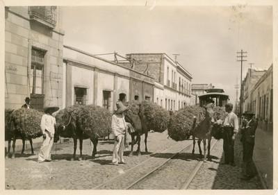 Burros cargados de paja, por una calle de la ciudad