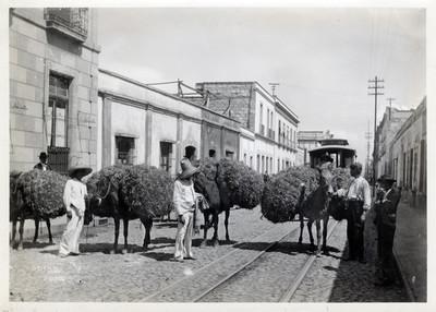 """""""Burros cargados de paja"""", por una calle de la ciudad"""