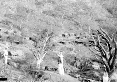 Colima extensión camp. N 03