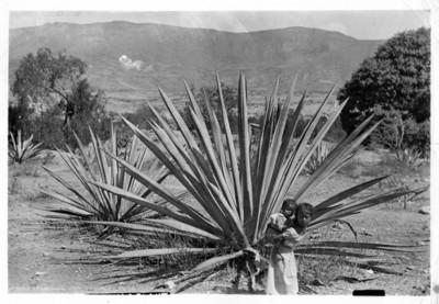 Campesino con acemilas cargadas de paja