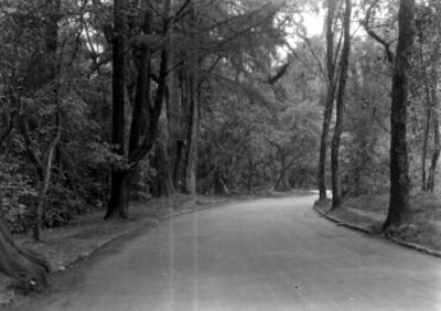 Vista de una carretera en el bosque de Chapultepec