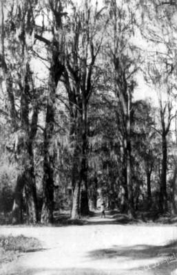 Bosque, vista parcial