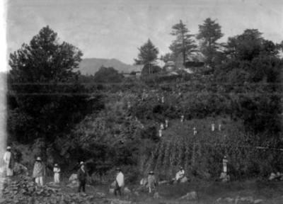 Hombres en campo de cultivo