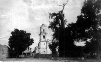"""""""Tree of Noche Triste at Popotla"""""""