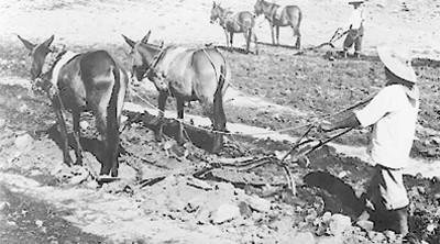 Campesinos aran la tierra con yunta
