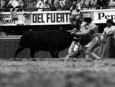 Antonio Velazquez es cogido or el toro durante faena