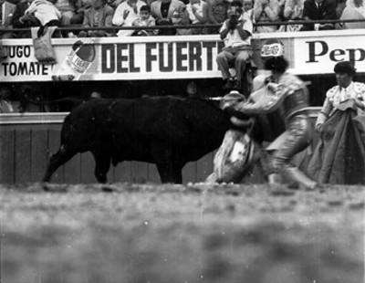 Antonio Velázquez es cogido por el toro durante una faena