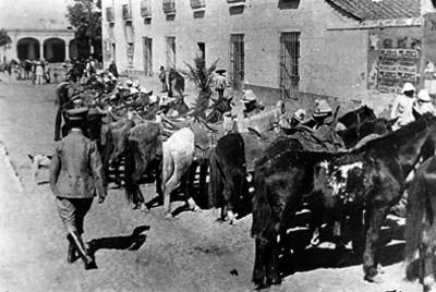 Federales alistan sus caballos frente a cuartel