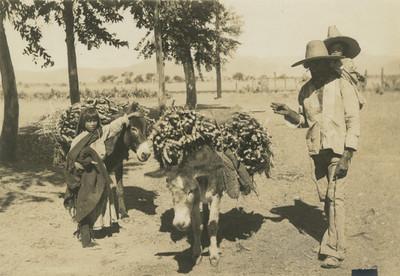 Familia Indígena con burros cargados de leña