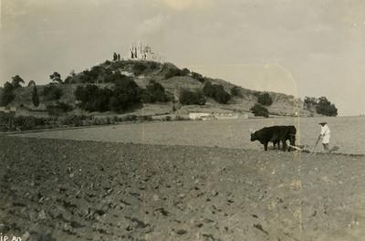 Campesino arando la tierra con una yunta