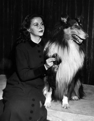 Mujer junto a perro de raza collie durante premiación, retrato