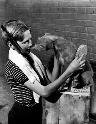 Mujer cepilla a un perro