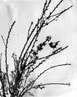 Ave parada en la rama de un árbol floral