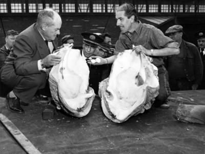 Hombres observan concha marina de gran tamaño