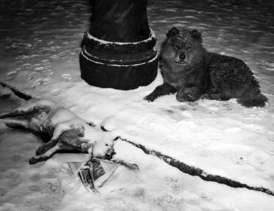 Perro junto a un animal muerto en una nevada