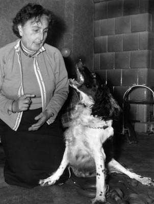Mujer lanza pelota a un perro