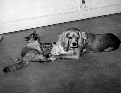 Perro con gatos