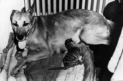 Animales domesticos sobre una cama
