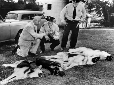 Policías junto a perros muertos