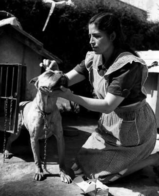 Mujer realiza curación a un perro