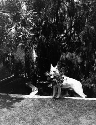Perro con flores en el hocico