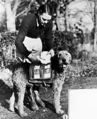 Mujer observa objetos en el lomo de un perro