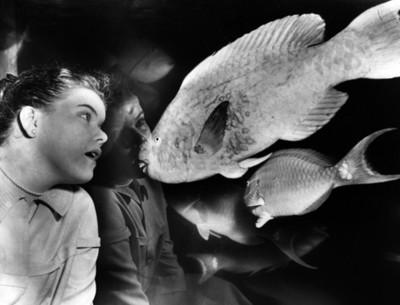 Mujer observa peces en una pecera, retrato