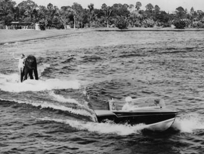 Mujer practica esquí acuático con elefante