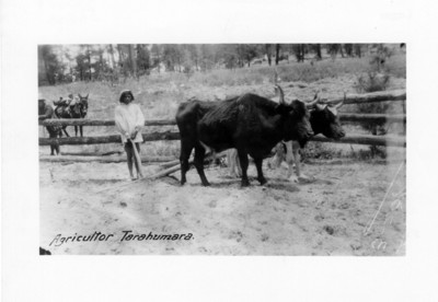 Agricultor tarahumara