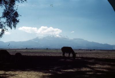 Asnos en un campo, al fondo el Iztaccihuatl