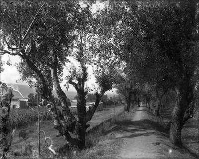 Camino entre árboles en Coyoacán, paisaje